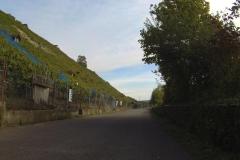 068_Durch die Weinberge sind unten optimale Radwege vorhanden