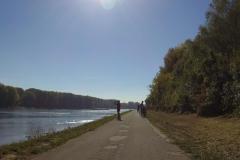 148_Rheinradweg hinter Germersheim - extrem niedriger Wasserstand im Rhein