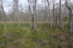 0135 - ... und beeindruckende Sumpflandschaft rechts des Highways