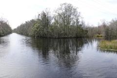 0140 - Sumpflandschaft