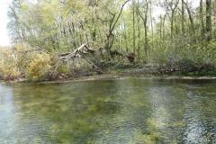 0377 - Auf dem Wakulla River