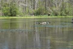 0381 - Schildkröten beim Sonnenbaden