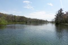0384 - Der Wakulla River auf seinem weiteren Weg