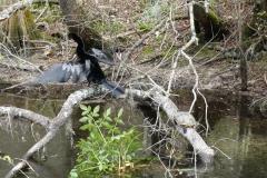 0385 - Der Park ist auch ein Paradies für Wasservögel aller Art