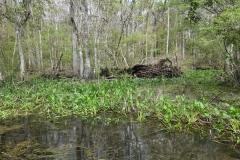 0388 - Dann wieder Urwald