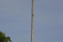 0450 - Da es hier keine Störche gibt, ist es ein Adlernest?