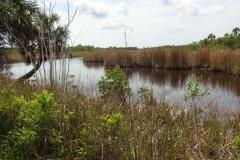 0497 - Die Straße führt mitten durch den Sumpf