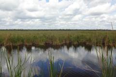 0501 - Blick über die Sumpflandschaft der Everglades