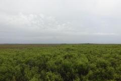 0526 - Nochmal ein Blick über den Sumpf der Everglades