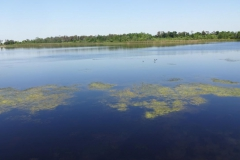 0622 - Der Airport Lakes Park Nähe Orlando International Airport