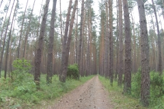 Endlose Wälder