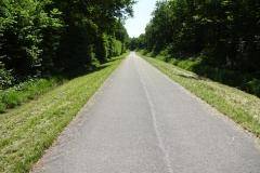 174 - Radweg durch den Wald