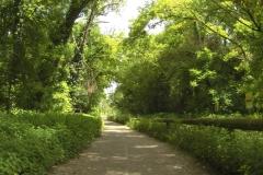 260 - Und weiter geht der Radweg im Grünen