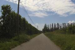 301 - Schnurgerade verläuft der Radweg