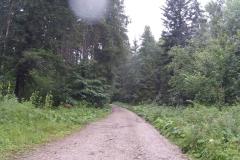 Lange Fahrt durch den Wald