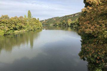 Charakteristisch für den Tag: Weinberge entlang des Ufers soweit das Auge reicht